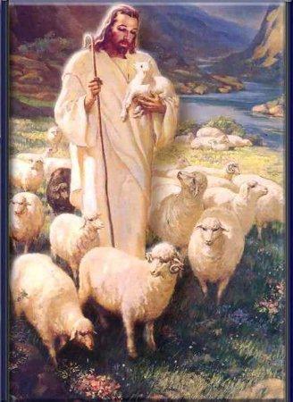 Iv domenica di pasqua anno a parrocchia don bosco - La pagina della colorazione delle pecore smarrite ...